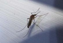 Hva hjelper mot myggstikk