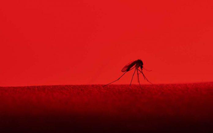 Hvorfor klør myggstikk