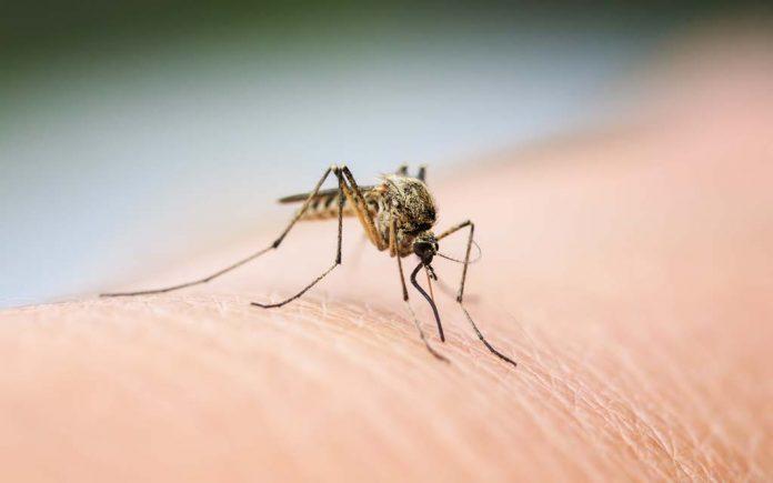 Kjerringråd mot myggstikk