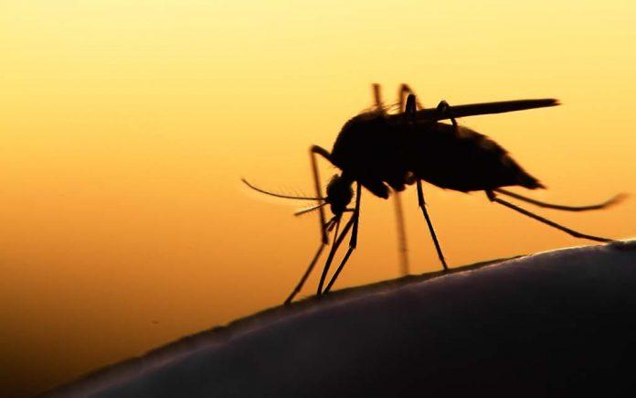 Zyrtec mot myggstikk