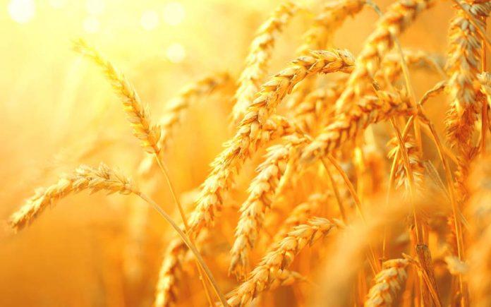 Hvete næringsinnhold
