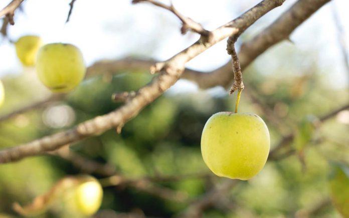 Hvilken frukt har mest C vitamin