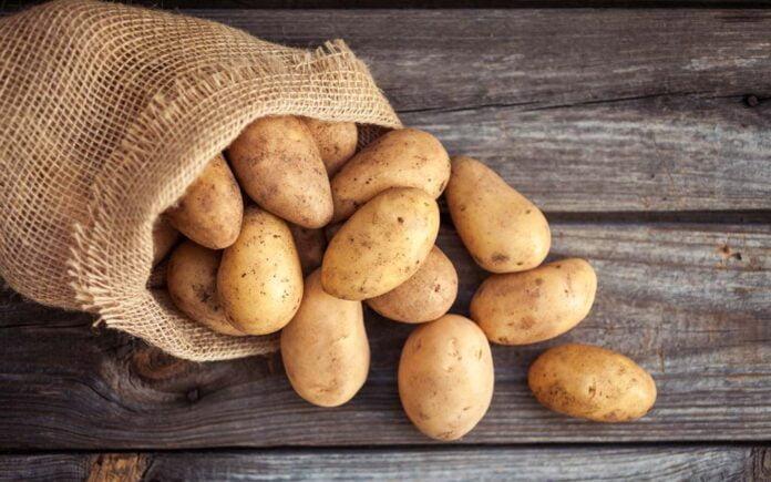 Er potet en grønnsak