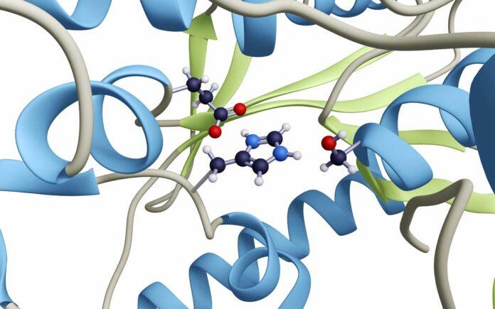 Hva er enzymer