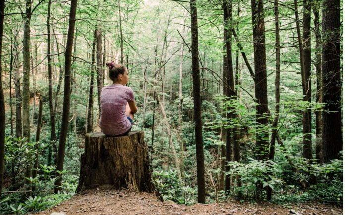Gå tur i skogen